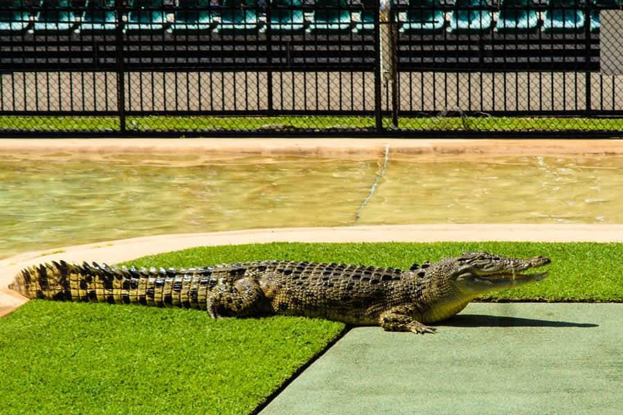 Australia Zoo on the Sunshine Coast